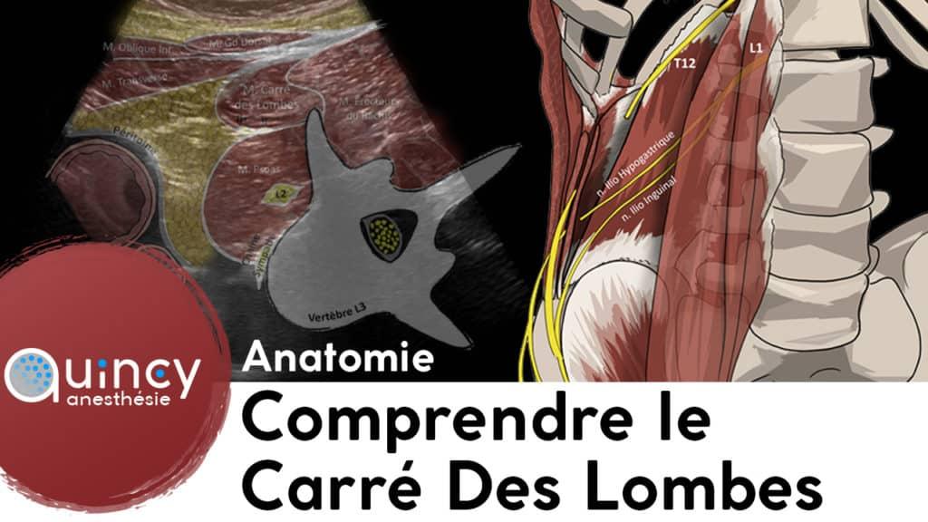 Anatomie carré des lombes
